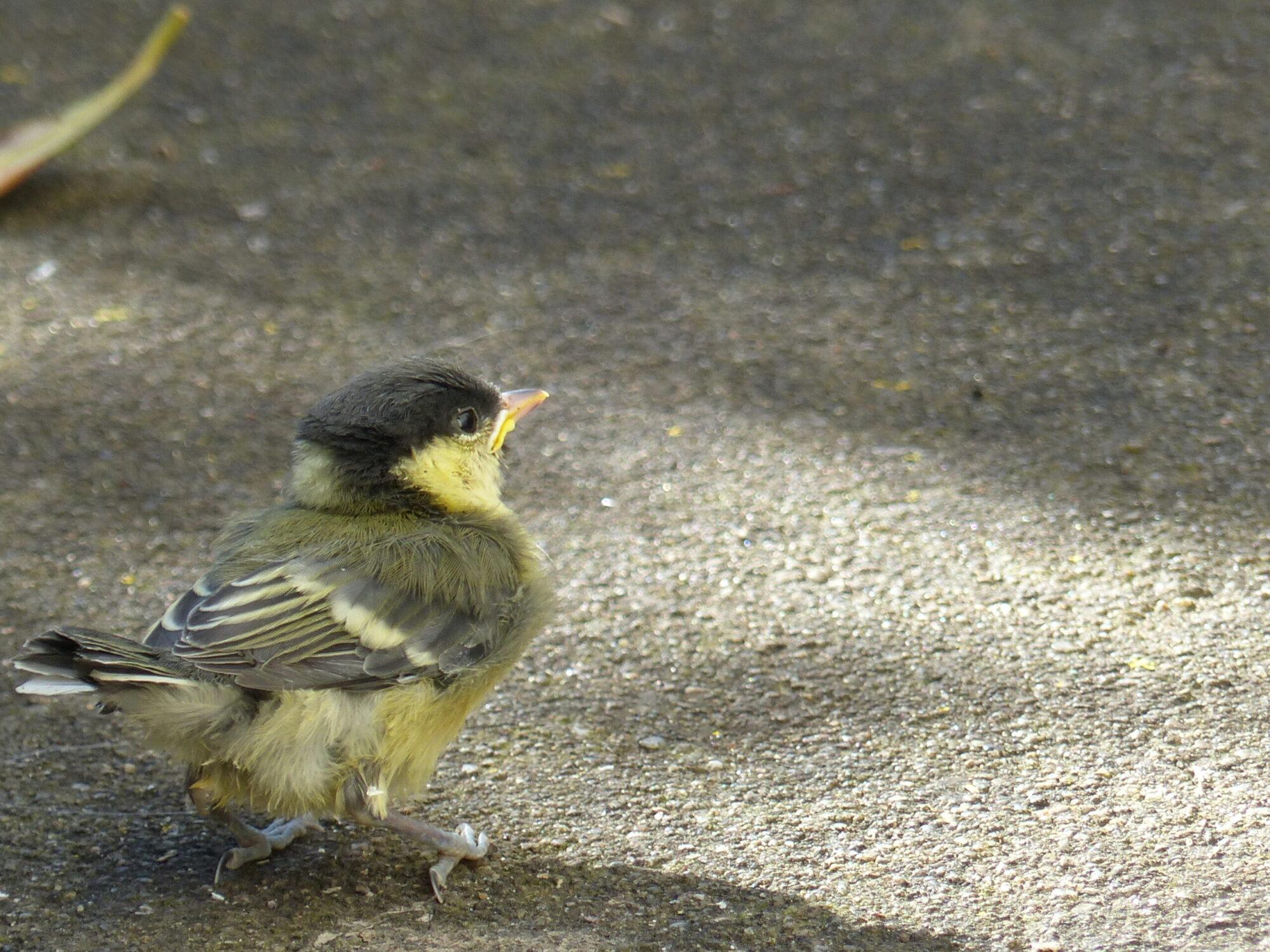 Ferienhaus Cheeky Bird